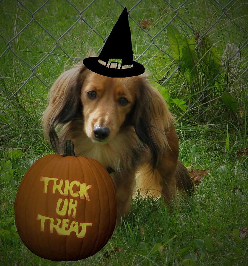 Halloween Photograph - Happy Halloween by Victoria Sheldon