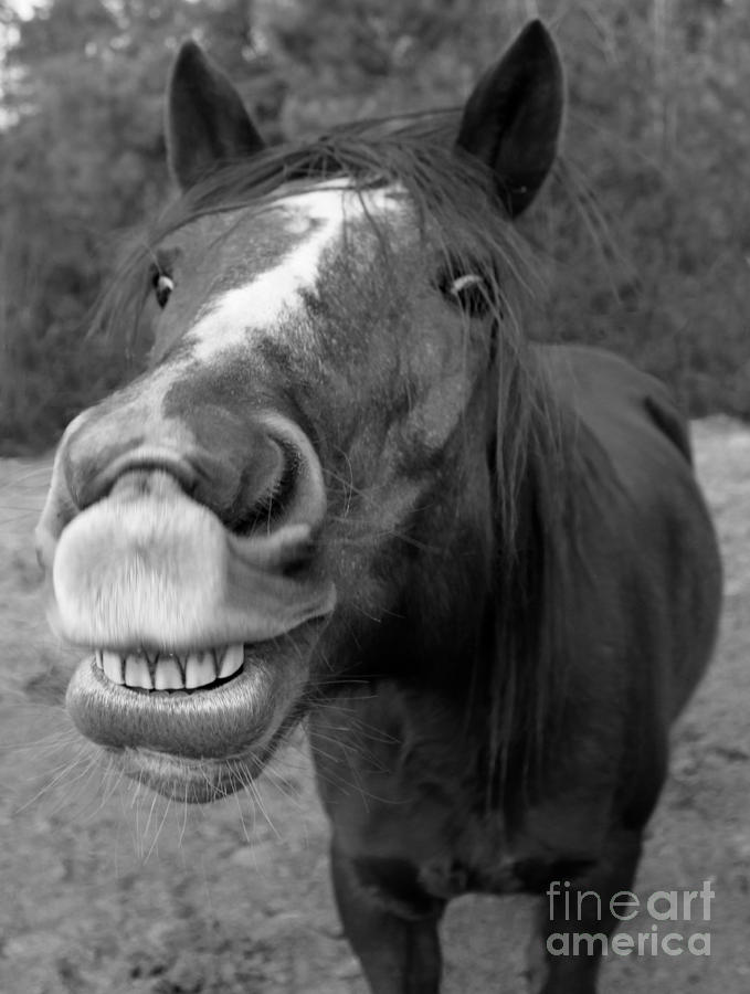 Smiling Horse Photograph - Happy Horse by Christean Ramage