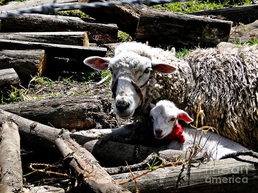 Al Bourassa Photograph - Happy Mothers Day by Al Bourassa