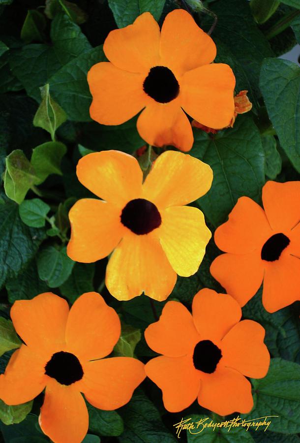 Landscape Photograph - Happy Orange by Ruth Bodycott