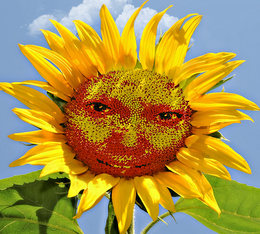 Funny Photograph - Happy Sunflower by Susan Leggett