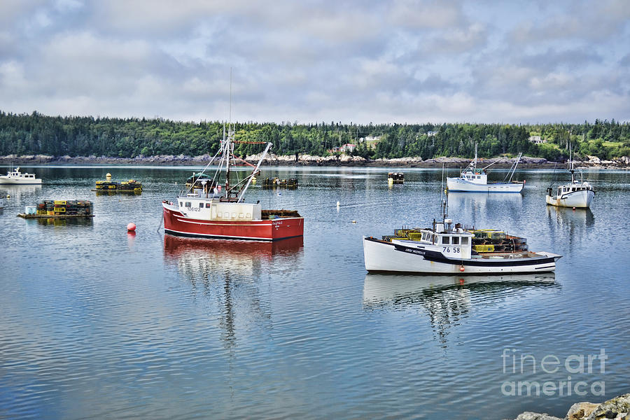 Harbor Life by Traci Cottingham