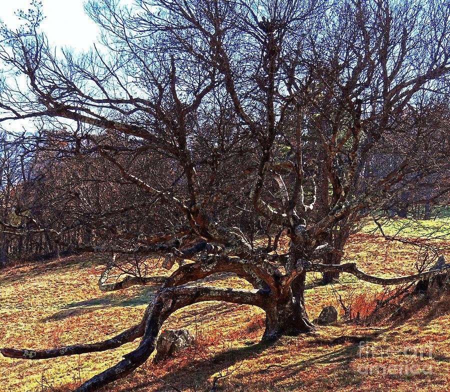 Blue Ridge Photograph - Hard Time by Steven Lebron Langston
