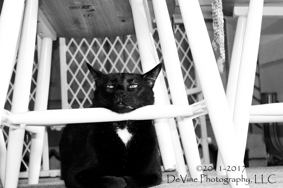 Cat Photograph - Harry One Twisted Cat by Stephani JeauxDeVine