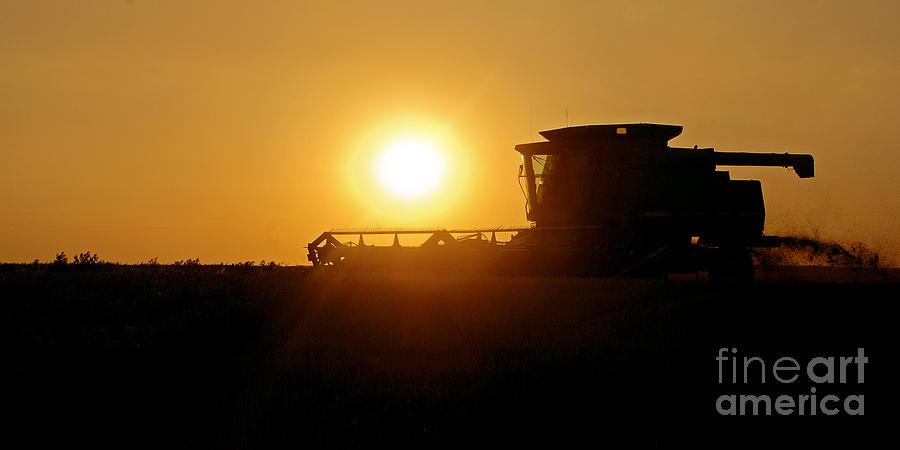 Harvest Photograph - Harvest Gold by Gib Martinez