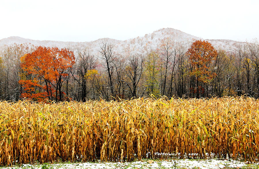 Snow Photograph - Harvest Snow by Carolyn Postelwait