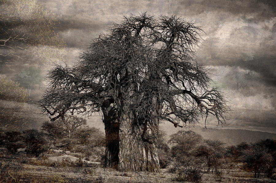 Baobab Haunted Prints Photograph - Haunted African Baobabs Tree by Jess Easter
