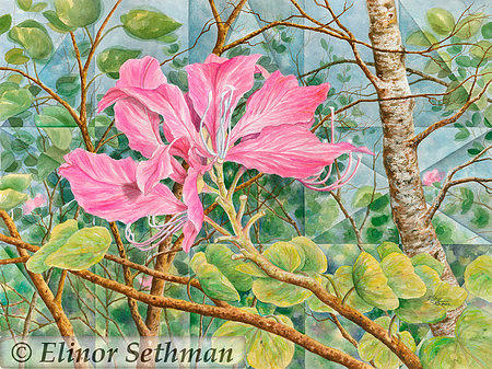Orchid Painting - Hawaiian Orchid Tree by Elinor Sethman