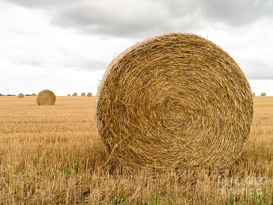 Hay Bales Photograph by Edward Fielding