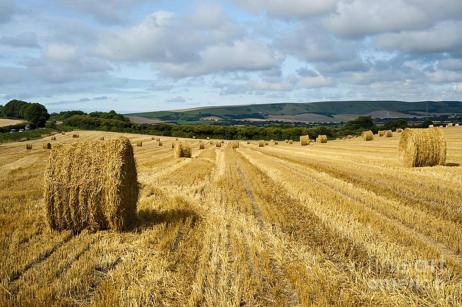 Field Photograph - Hay Field by Donald Davis
