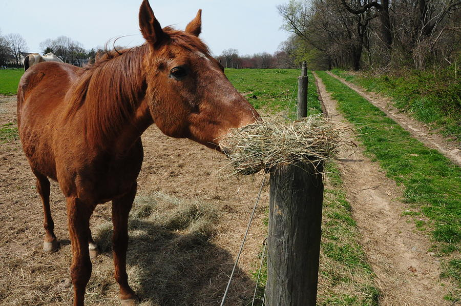 Horse Photograph - Hay Is For Horses by Bill Cannon