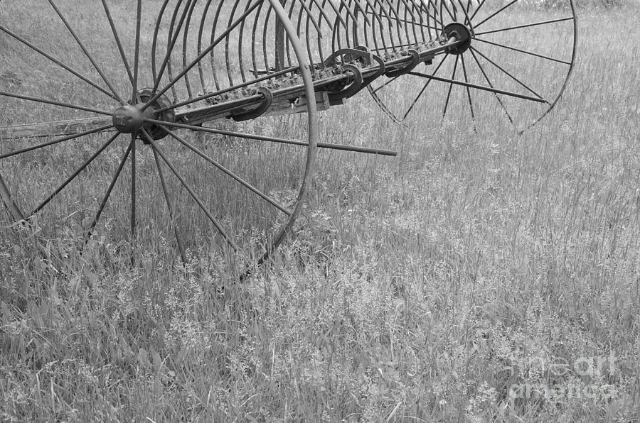 Spring Photograph - Hay Rake  by Wilma  Birdwell