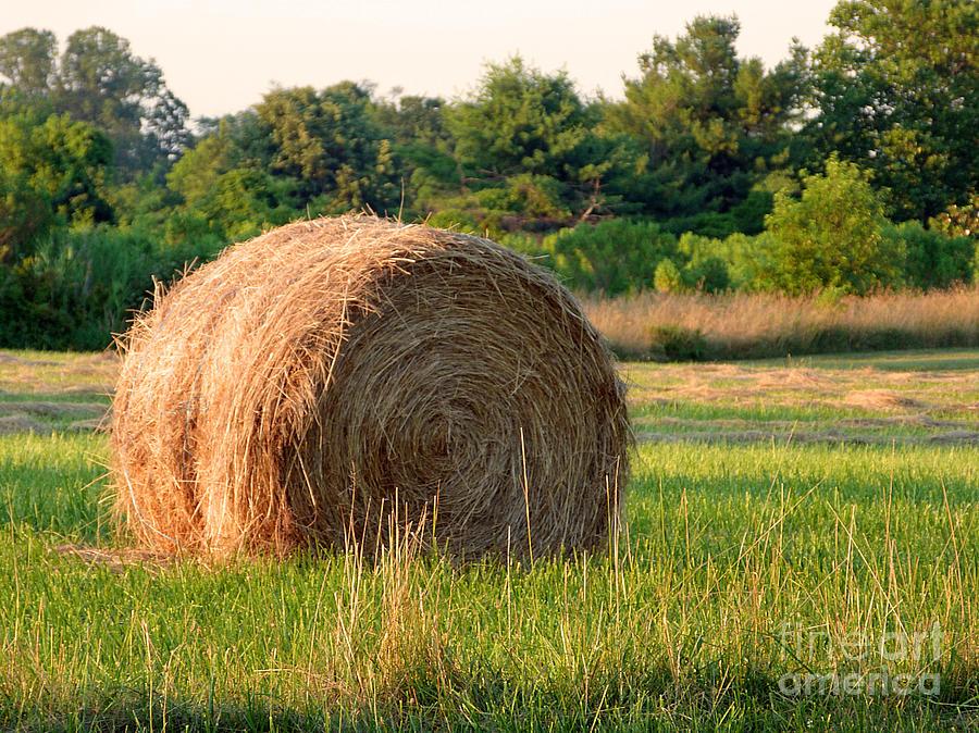 Hay Photograph - Haybale by Louise Peardon