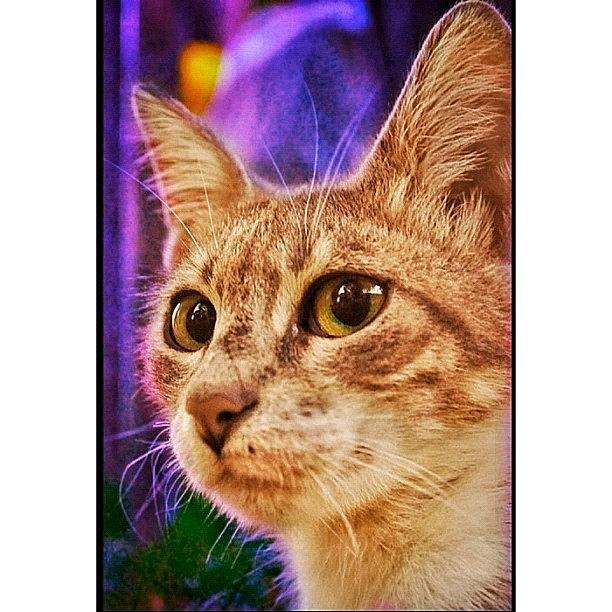 Animal Photograph - Haydar #cat #cats #tagsforlikes by Murat Karakas