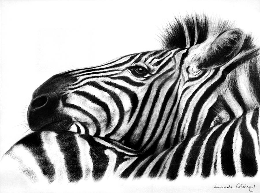 Zebra Drawing - Head Rest by Lucinda Coldrey