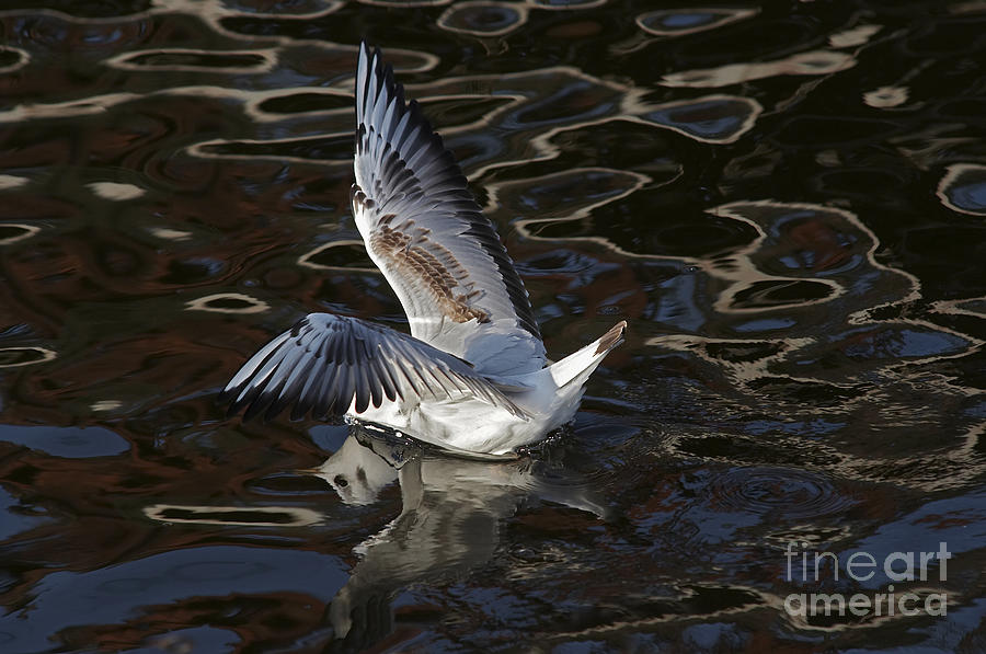 Animal Photograph - Head Under Water by Michal Boubin
