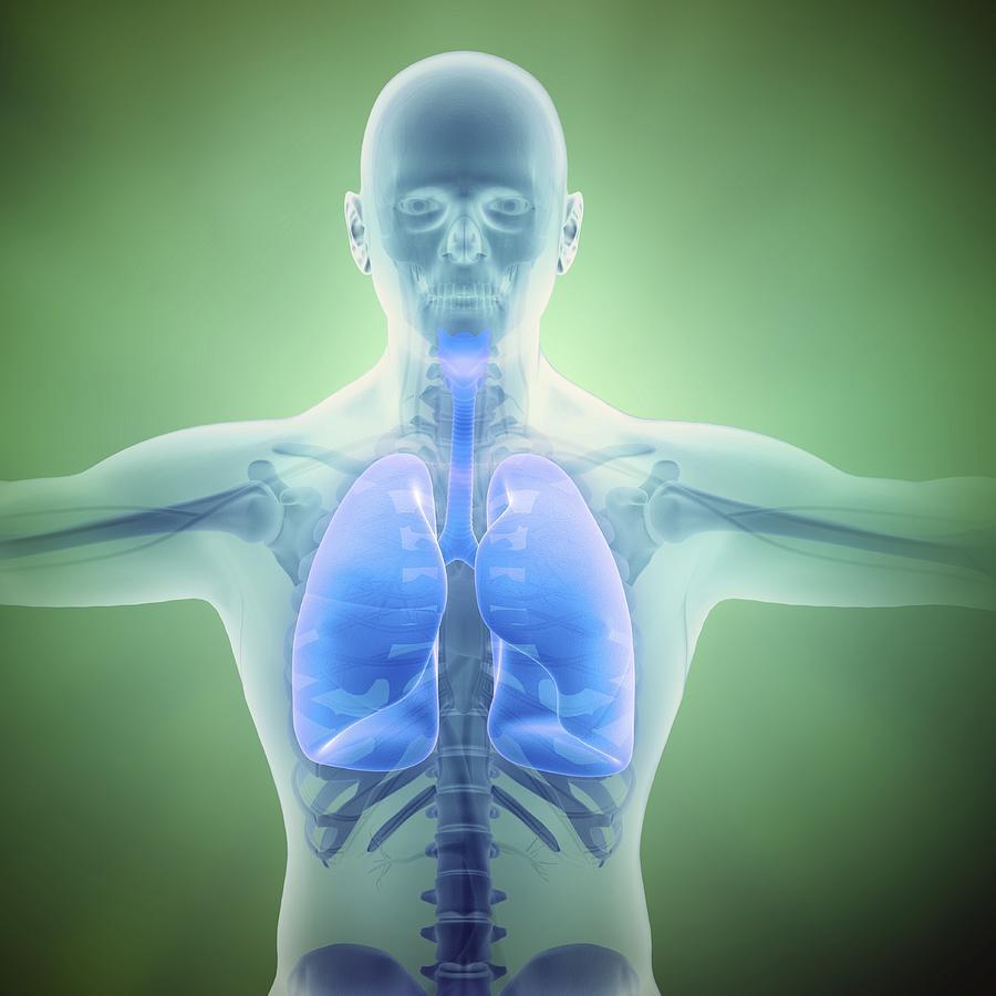 Healthy Lungs, Artwork Digital Art by Andrzej Wojcicki