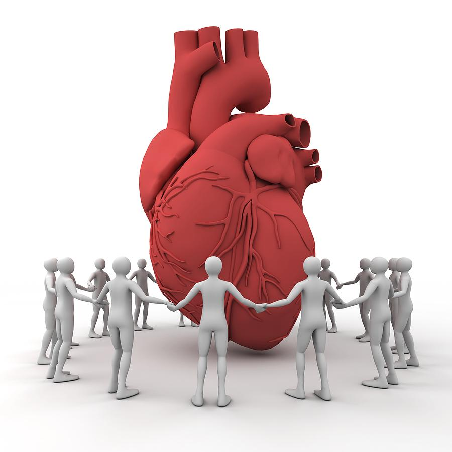 Cardiac Photograph - Heart Care, Conceptual Image by Pasieka