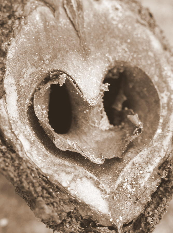 Walton Park Photograph - Heart Center Of A Walnut Shell by Maureen  McDonald