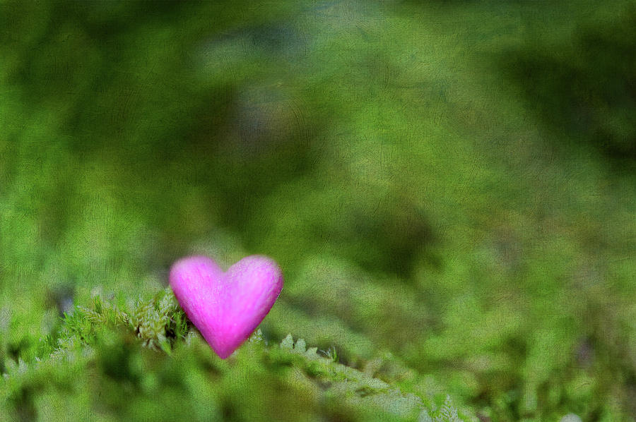 Horizontal Photograph - Heart In Moss by Alexandre Fundone