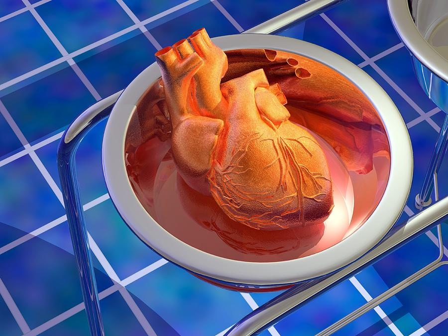 Heart Photograph - Heart Surgery, Artwork by Laguna Design