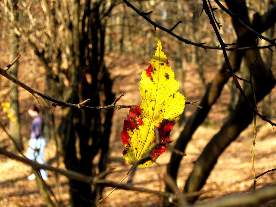 Autumn Photograph - Hearts Memory by Ioana Geacar