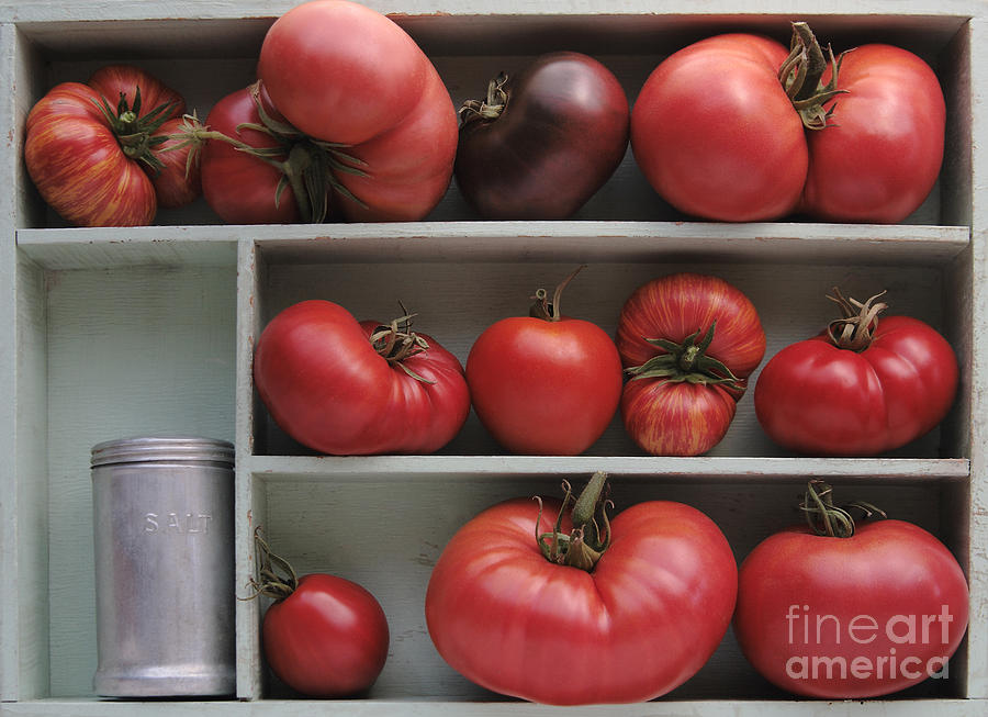 Tomatoes Photograph - Heirloom Tomatoes With An Old Salt Shaker by Ruby Hummersmith