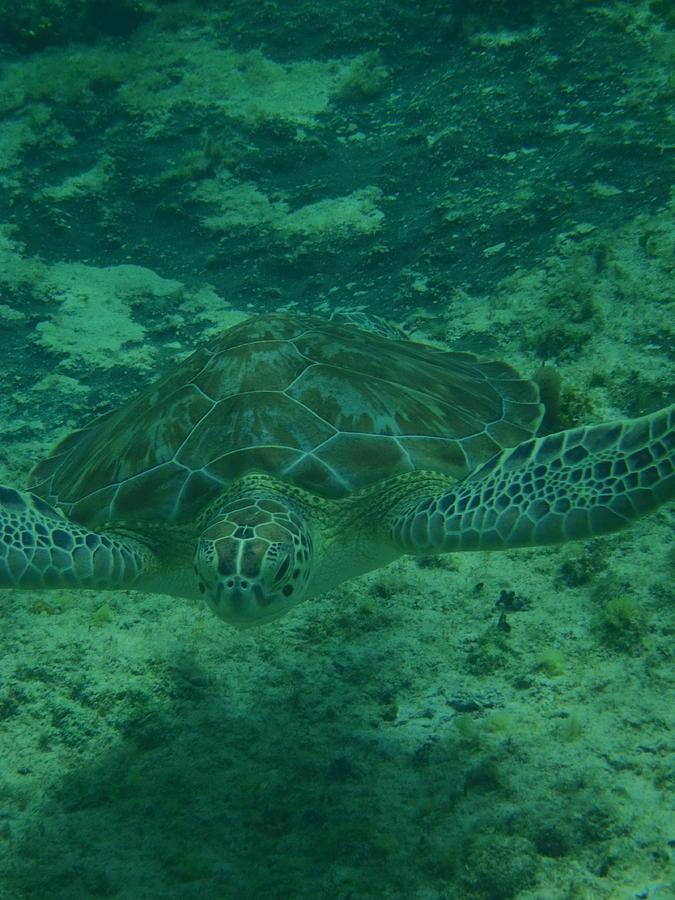 Green Sea Turtle Photograph - Hello Baaabbbyyy by Kimberly Perry