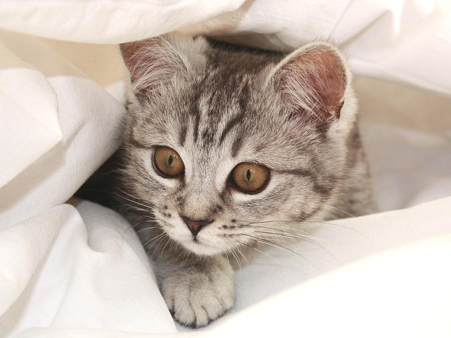 Kitten Photograph - Hello Kitten by Claudia Moeckel