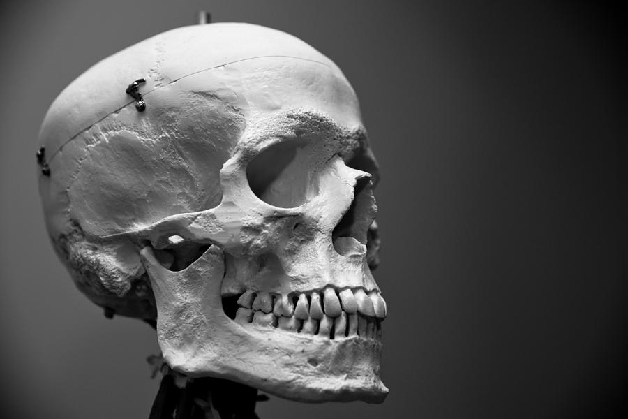Skull Photograph - Hello my Friend by Edward Myers