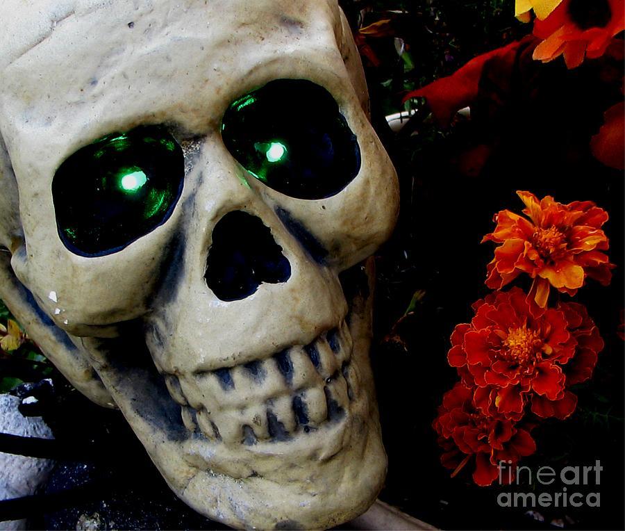 Skull Photograph - Hello My Pretty by Judyann Matthews