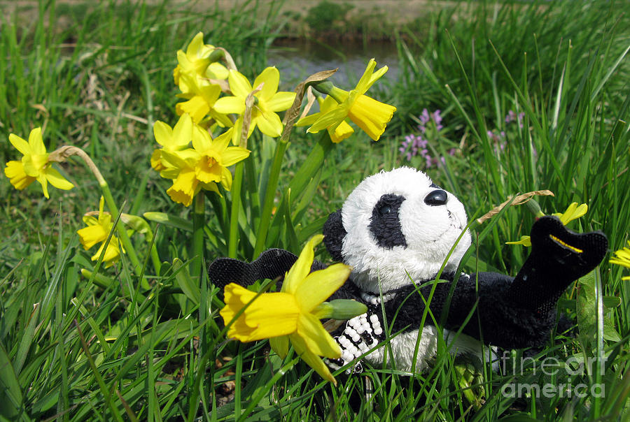 Still Life Photograph - Hello Spring. Ginny From Travelling Pandas Series. by Ausra Huntington nee Paulauskaite
