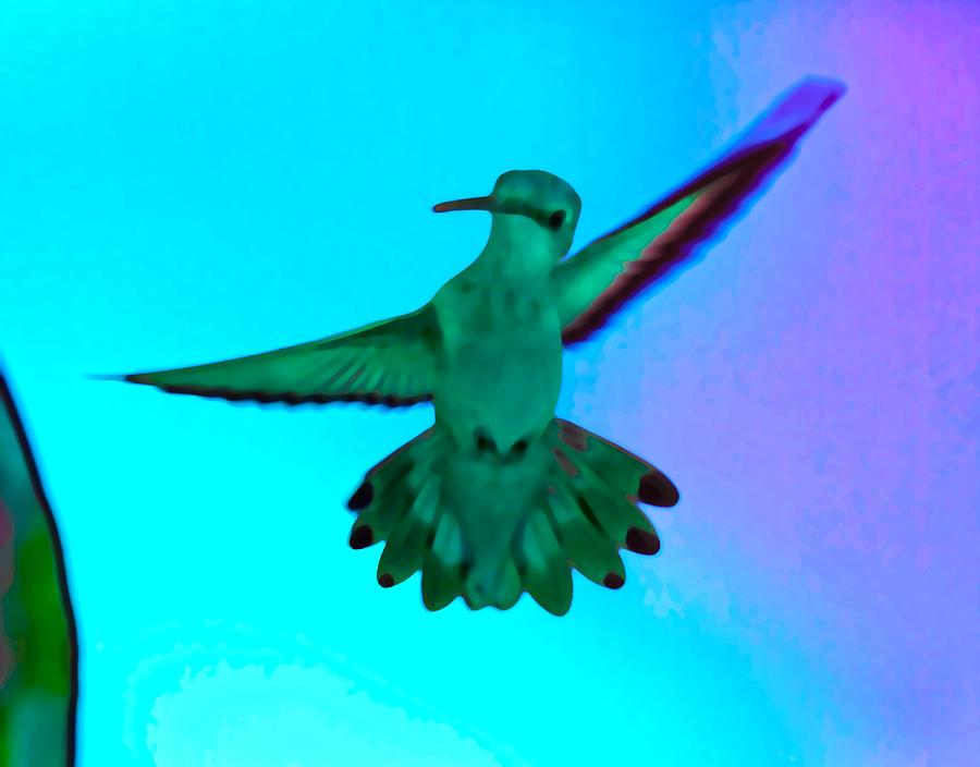 Hummingbirds Digital Art - Hello There  by Betsy Knapp