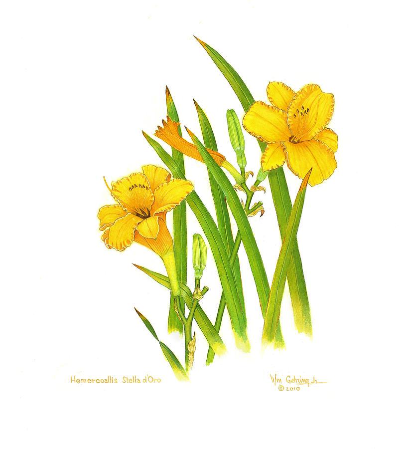 Lilies Painting - Hemercoallis Stella d Oro by Bill Gehring