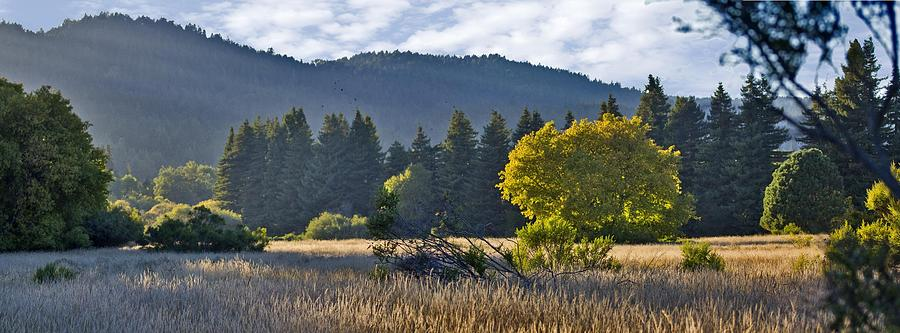 Henry Cowell Meadow Sunset Photograph by Larry Darnell