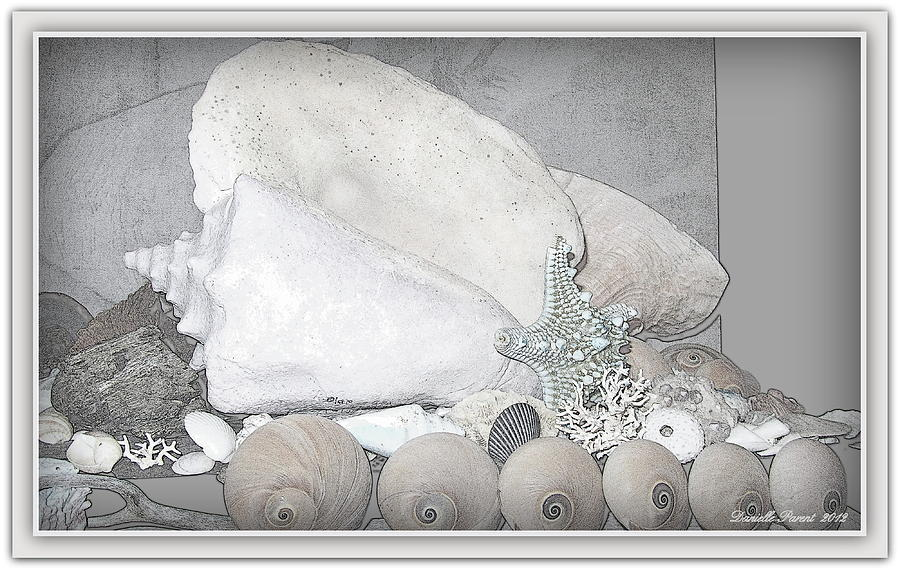 Sea Life Prints Photograph - Her Majesty  by Danielle  Parent