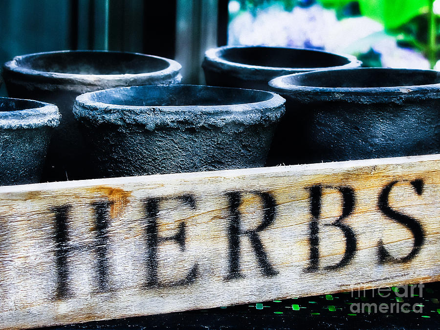 Herbs Photograph - Herb Pots by Colleen Kammerer