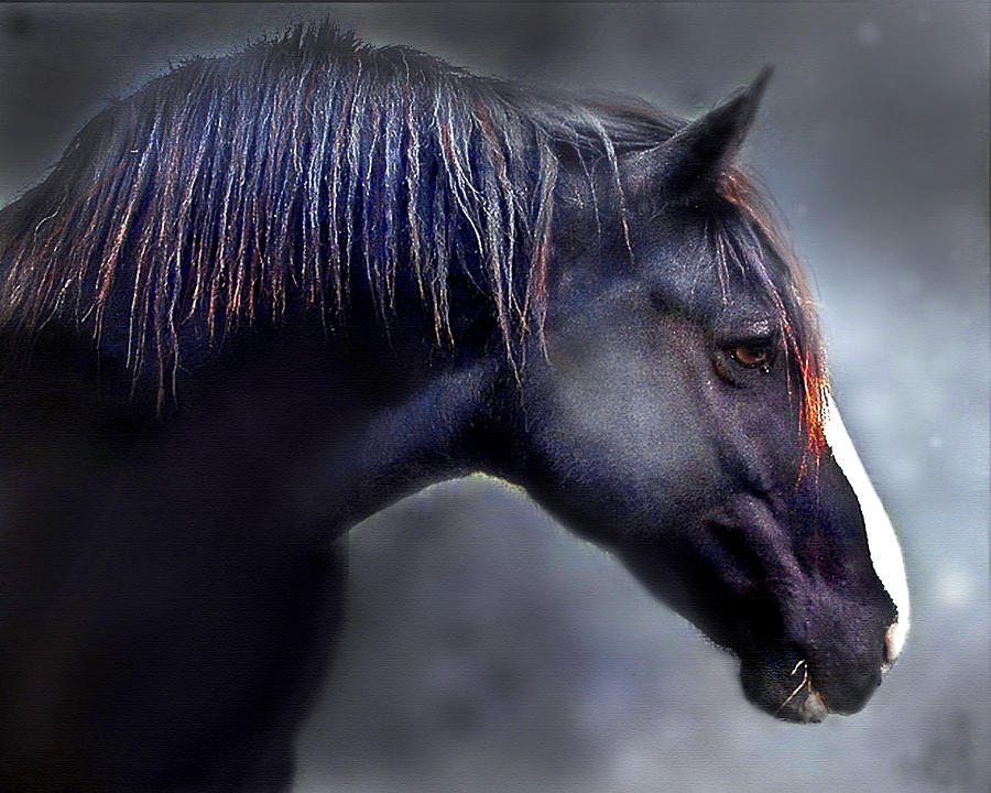 Horse Photograph - Hercules The Black Stallion by Dorothy Walker