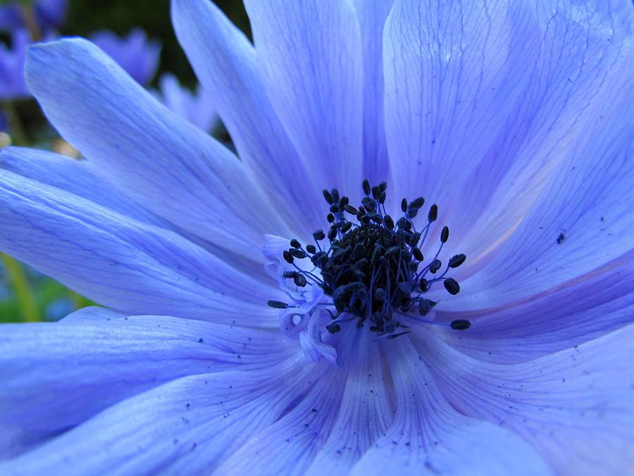 Blue Photograph - Here I Am by Eva Kondzialkiewicz