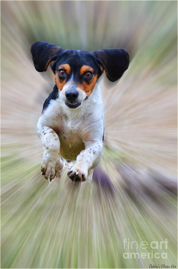 Animals Photograph - Here I Come by Debbie Portwood