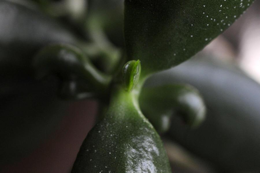 Jade Plant Photograph - Here I Come by Wanda Brandon