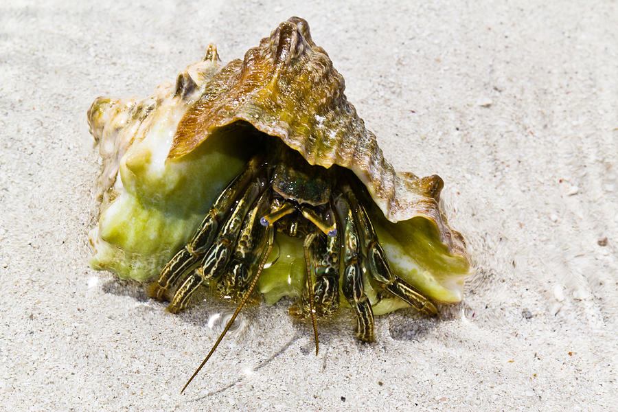 Florida Keys Photograph - Hermit Crab by Bill Rogers
