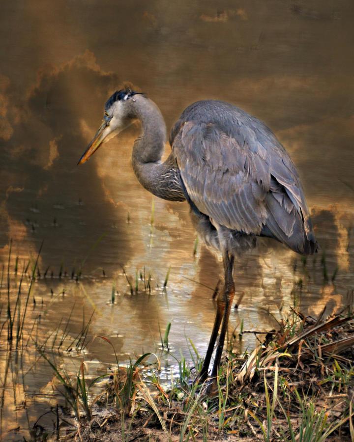 Heron Photograph - Heron Bronze by Marty Koch