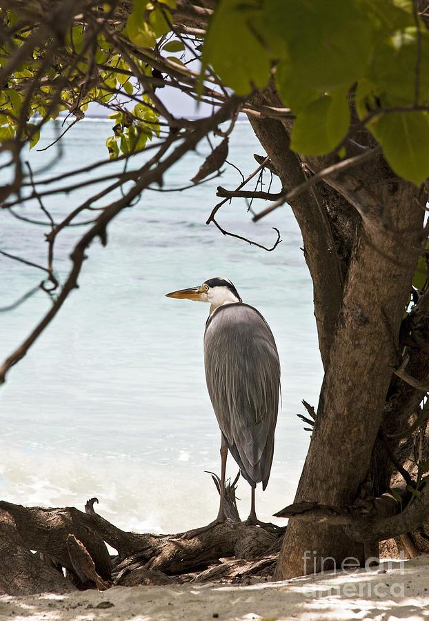 Alone Photograph - Heron by Jane Rix