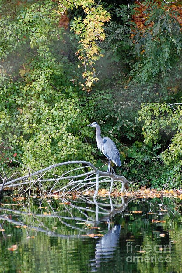 Heron Photograph - Heron by Marsha Thornton