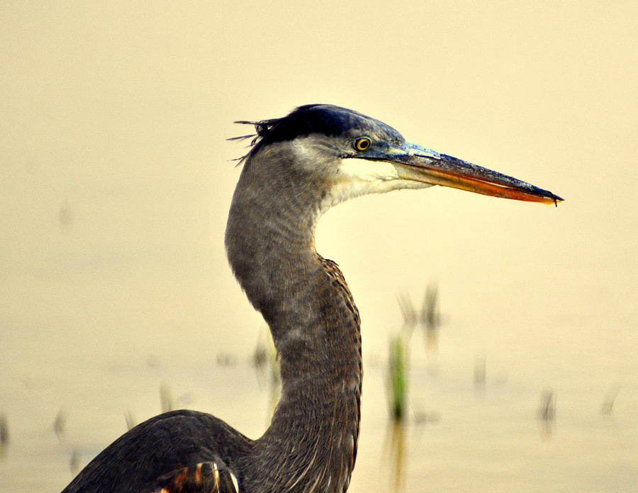 Birds Photograph - Heron One by Marty Koch