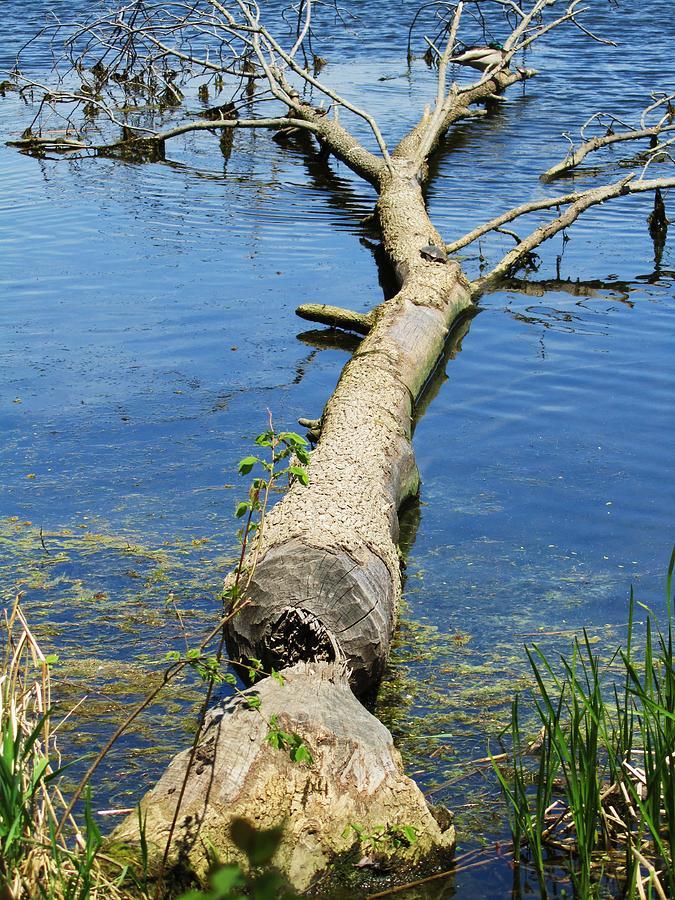 Herrick Lake Photograph - Herrick Lake by Todd Sherlock