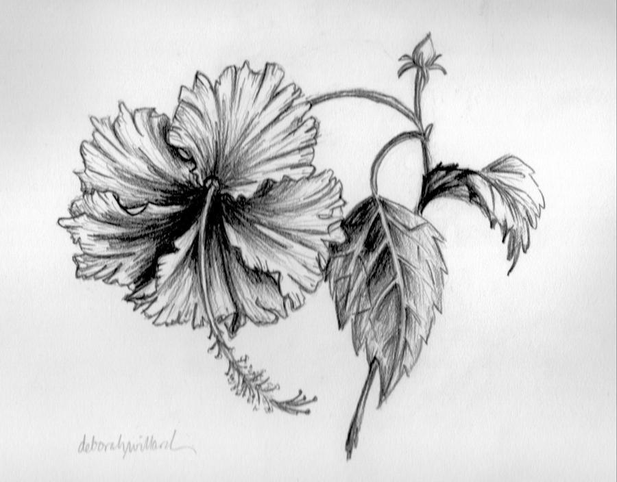 Hibiscus Ballet Drawin...