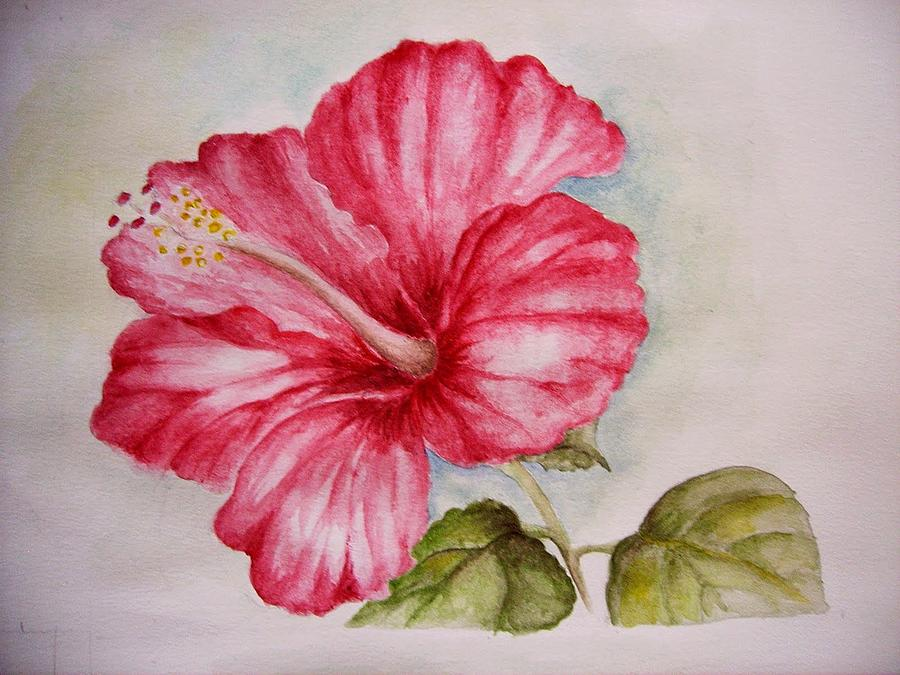 Red Hibiscus Painting - Hibiscus Flower by Draia Coralia