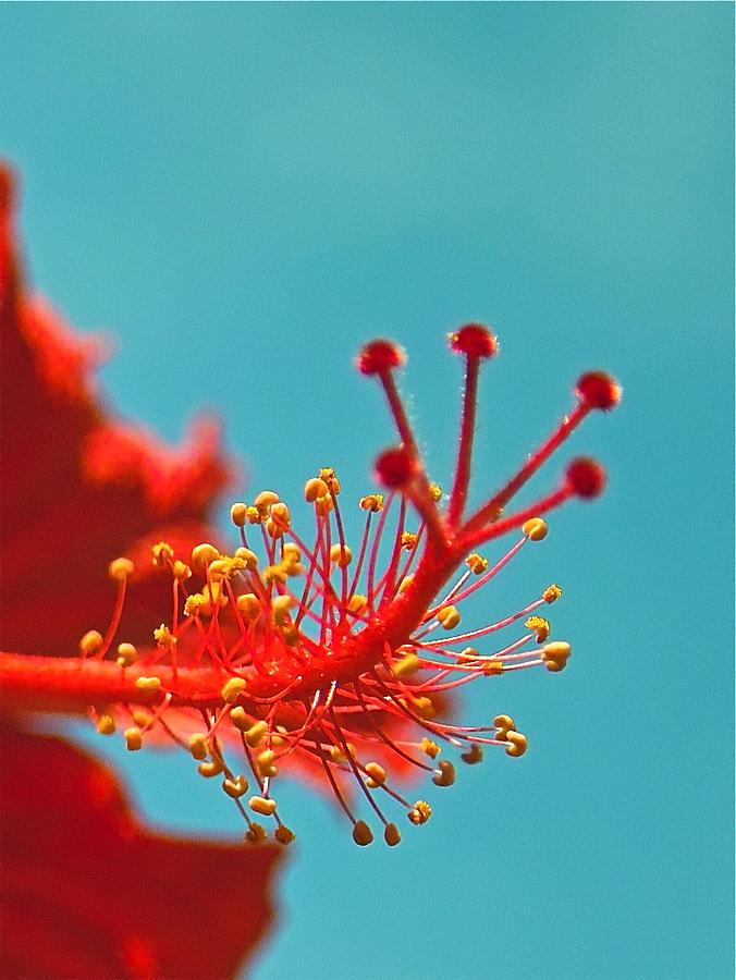 Hibiscus Photograph - Hibiscus by Jocelyn Kahawai
